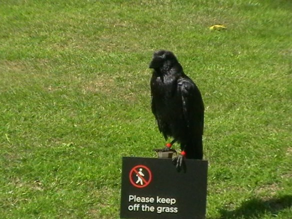 This is Thor - one of the Ravens from the Tower of London. Taken in 2009 It is said that if the Ravens ever leave the Tower, then England will fall.